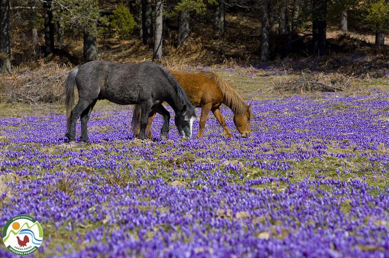 Εθνικό Πάρκο Ροδόπης